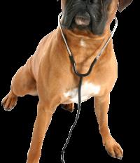 Precio de las urgencias veterinarias