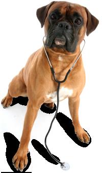 Precios de urgencias veterinarias madrid